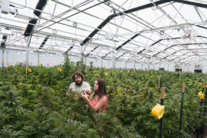 Oregon weed farm